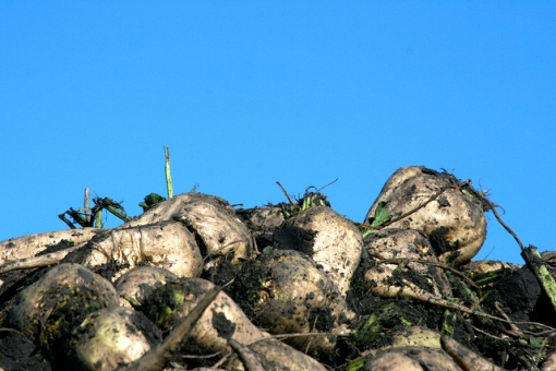 Photo par Heather. Sugar Beet Harvest. CC. https://flic.kr/p/gynqqq
